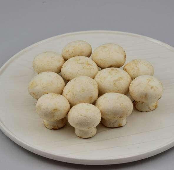 017 1蘑菇